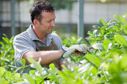 Ausbildung Zum Gärtner